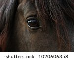 Stock photo nice detail of the head and especially of this dark horse s eye 1020606358