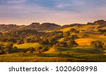 pasture lands and california... | Shutterstock . vector #1020608998