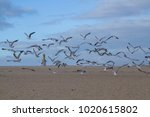 seagulls flying on the beach | Shutterstock . vector #1020615802
