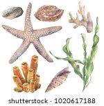 watercolor underwater set. hand ...   Shutterstock . vector #1020617188