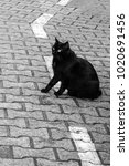 a black cat sits on a... | Shutterstock . vector #1020691456