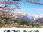 cherry blossoms and snowy... | Shutterstock . vector #1020692032