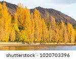 scenic morning view by the...   Shutterstock . vector #1020703396