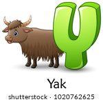letter y is for yak cartoon... | Shutterstock .eps vector #1020762625