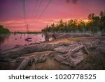 sunset at mangrove swamp | Shutterstock . vector #1020778525