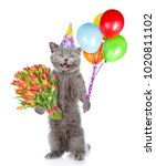 happy cat in party hat with a... | Shutterstock . vector #1020811102