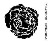 flower rose  black and white.... | Shutterstock .eps vector #1020835912