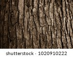 Bark Of A Big Tree In The Forest