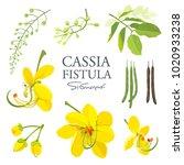 Cassia Fistula Flower  National ...