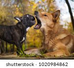 huge red dog opened the... | Shutterstock . vector #1020984862