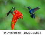 two hummingbirds are meeting at ... | Shutterstock . vector #1021026886