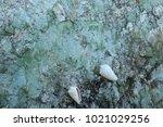 fossil shell on the sedimentary ... | Shutterstock . vector #1021029256