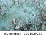 fossil shell on the sedimentary ... | Shutterstock . vector #1021029292