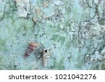 fossil shell on the sedimentary ... | Shutterstock . vector #1021042276