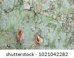 fossil shell on the sedimentary ... | Shutterstock . vector #1021042282