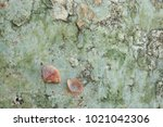fossil shell on the sedimentary ... | Shutterstock . vector #1021042306