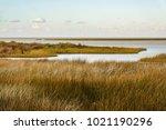 Salt marsh with saltmeadow...