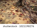 old big tree root a long the... | Shutterstock . vector #1021198276
