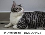 hybrid cats fed closed systems... | Shutterstock . vector #1021204426
