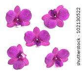 Beautiful Purple Orchid...