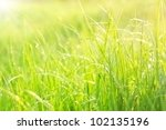 Bright Green Lush Grass With...