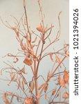dry leaves in the garden | Shutterstock . vector #1021394026