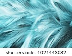 blue vintage feather texture... | Shutterstock . vector #1021443082
