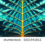 tropical palm leaf  large... | Shutterstock . vector #1021541812