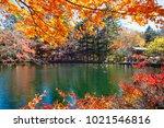the beautiful maple season at... | Shutterstock . vector #1021546816