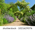 honeysuckle arches over a... | Shutterstock . vector #1021629376