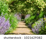 honeysuckle arches over a... | Shutterstock . vector #1021629382