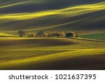 agricultural rolling spring  ... | Shutterstock . vector #1021637395
