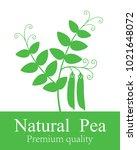Pea Plant. Isolated Pea On...