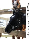 Small photo of young stallion of black color with a white asterisk on his forehead stands in a enclosure on the street in the open air, in a halter.