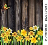 daffodils flowers on the wooden ... | Shutterstock .eps vector #1021724056