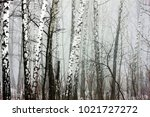 winter thick forest in a thick... | Shutterstock . vector #1021727272