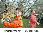 Two women pruning fruits tree in the orchard - stock photo