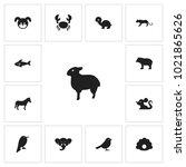 set of 13 editable zoology... | Shutterstock .eps vector #1021865626