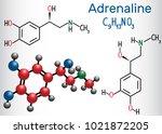 adrenaline  epinephrine ... | Shutterstock .eps vector #1021872205