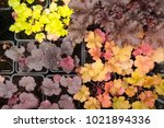 different flowers  on the... | Shutterstock . vector #1021894336