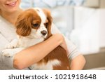 Stock photo cropped shot of a happy smiling woman holding her lovely spaniel puppy posing at the vet clinic 1021918648