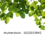 tree branch isolated   Shutterstock . vector #1022015842