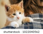 Stock photo kitten on the arm of the boy outdoors child huge his love pet 1022040562