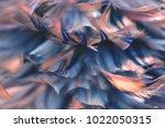 image nature art of wings bird... | Shutterstock . vector #1022050315
