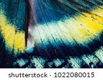 detailed wing of alcides... | Shutterstock . vector #1022080015