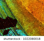 beautiful iridescent wing of a... | Shutterstock . vector #1022080018
