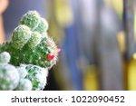 cactus early morning sunlight | Shutterstock . vector #1022090452