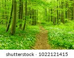 footpath winding through forest ... | Shutterstock . vector #1022121415