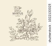 myrtus  myrtle  myrtus branch... | Shutterstock .eps vector #1022133325