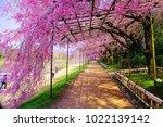 kyoto  japan   13 april 2017 ... | Shutterstock . vector #1022139142